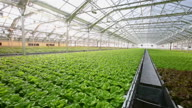(HZ) US Giant Greenhouse