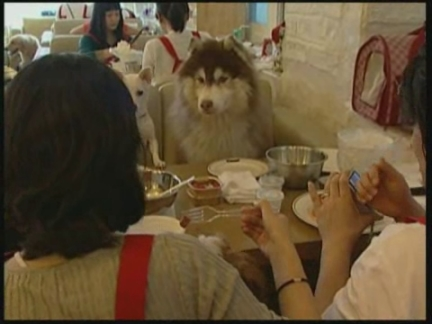 (HZ) SKorea Pet food
