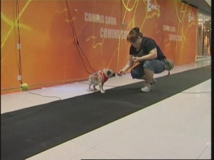 Hong Kong Pet Olympics