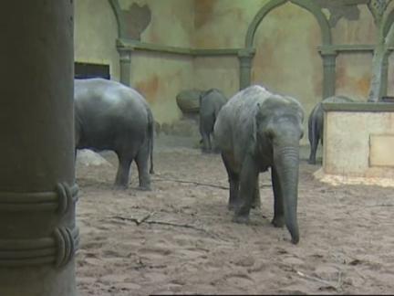 (HZ) Germany  Zoo Keeper