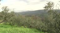 MEEX Italy Tunisia Olive Oil