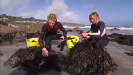 (HZ) UK Seaweed