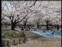 City Stockshots - Tokyo: Part 5