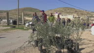 MEEX West Bank Olive Trees
