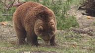 HZ Ukraine Bear Sanctury