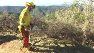 US CA Wildfires Forest Management (CR HFR)