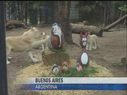 DV Argentina Zoo