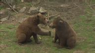 (HZ) Croatia Bears