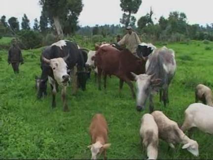 (HZ) Ethiopia Biogas