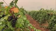 US Wildfires Wine Smoke Damage (CR)