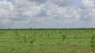 Cuba US Agriculture