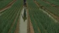 HZ UK Farming Weather