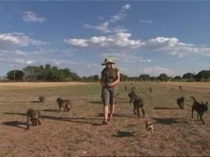 (HZ) Namibia Animals