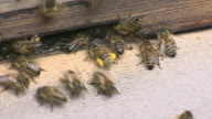HZ World Hungry Bugs