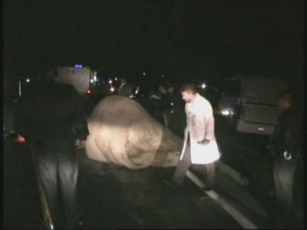 Mexico Elephant