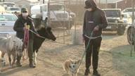 US CA Fire Horses (NR)