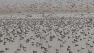 (HZ) India Kashmir Wetlands