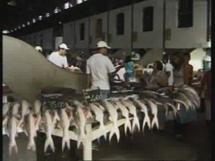 HZ) Breeding Fish   AP Archive